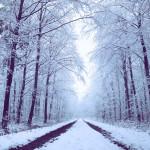 冬の乾燥対策